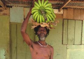 Jamaican banana farmer
